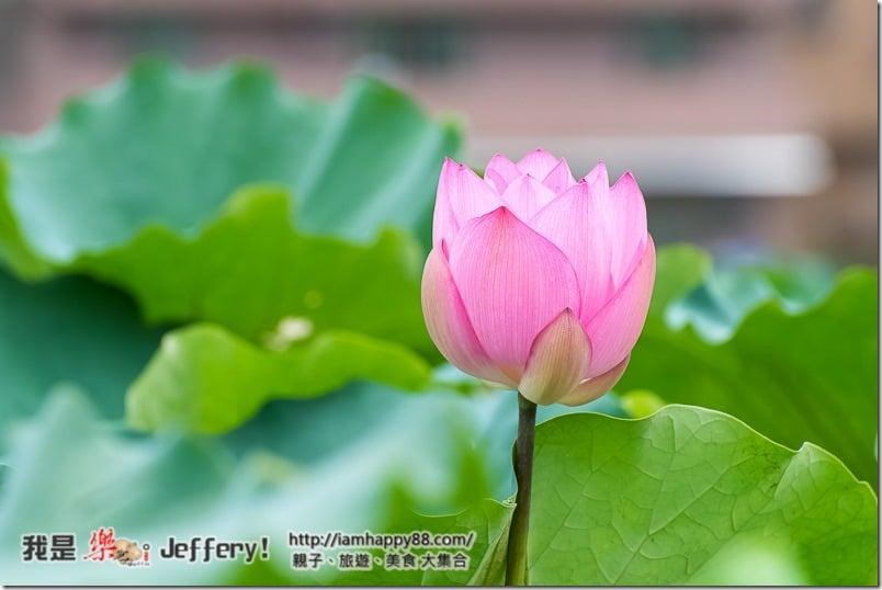 20160905-Shuangxi-DSC_6539-s