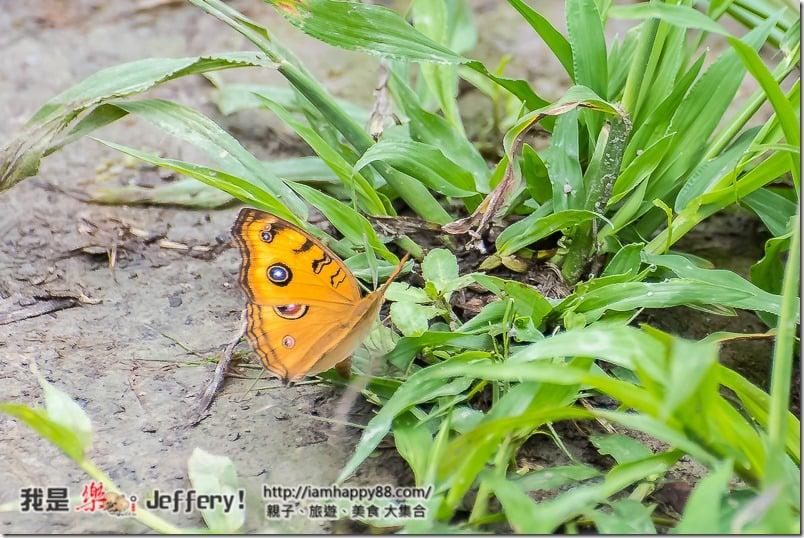 20160905-Shuangxi-DSC_6562-s