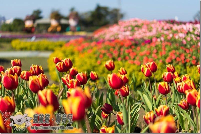 20170122-DSC_9126-flowerjs-s