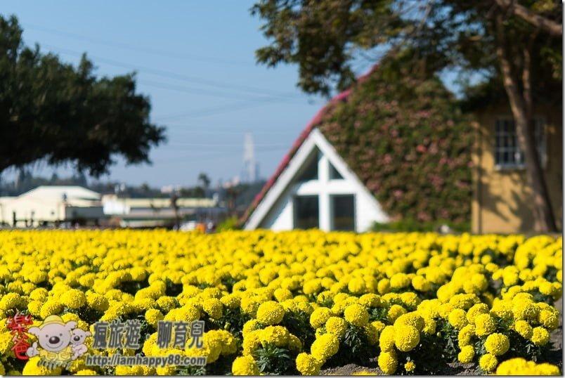 20170122-DSC_9143-flowerjs-s